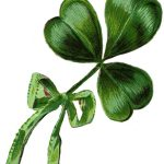 irish-shamrock-3